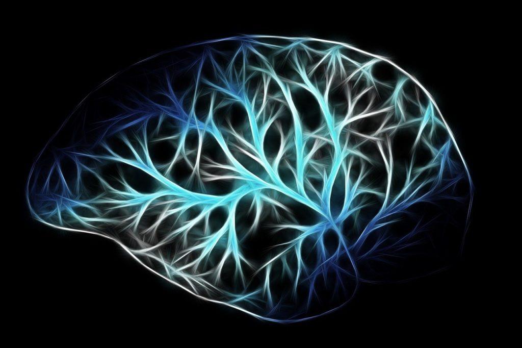 Aivot ja hermot